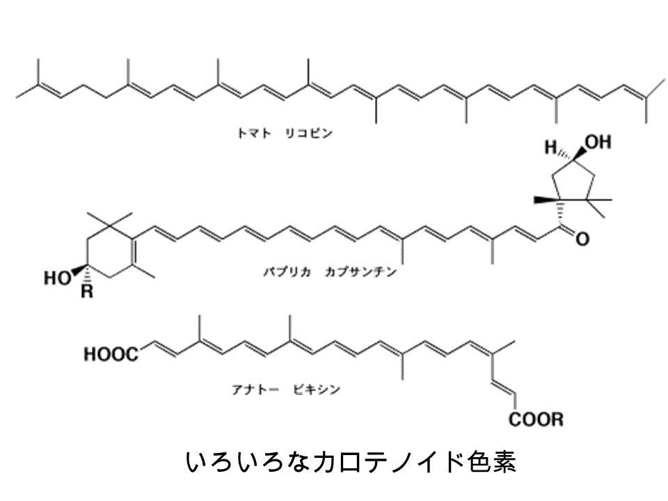 20 波数 cm -1 周波数 Hz X線X線 可視光マイクロ波 ガンマ線紫外光赤外・遠赤外光ラジオ波 波長 m deca mdmmm μm nm pm 波長 λ (m), 波数 ν (cm -1 ), 周波数f (Hz) の関係と生 活とのかかわり