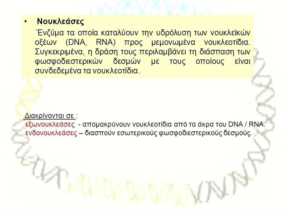 Νουκλεάσες Ένζύμα τα οποία καταλύουν την υδρόλυση των νουκλεϊκών οξέων (DNA, RNA) προς μεμονωμένα νουκλεοτίδια. Συγκεκριμένα, η δράση τους περιλαμβάνε