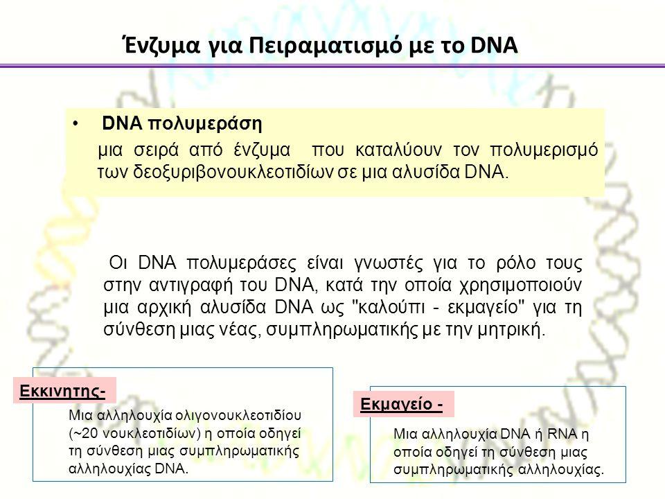 DNA πολυμεράση μια σειρά από ένζυμα που καταλύουν τον πολυμερισμό των δεοξυριβονουκλεοτιδίων σε μια αλυσίδα DNA. Ένζυμα για Πειραματισμό με το DNA Οι