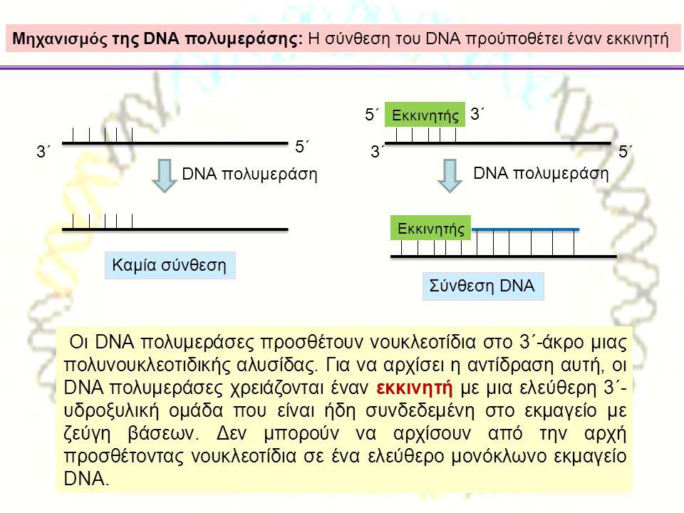 3΄ 5΄ Μηχανισμός της DNA πολυμεράσης: Η σύνθεση του DNA προύποθέτει έναν εκκινητή DNA πολυμεράση Καμία σύνθεση 3΄5΄ Εκκινητής 5΄ 3΄ DNA πολυμεράση Εκκ