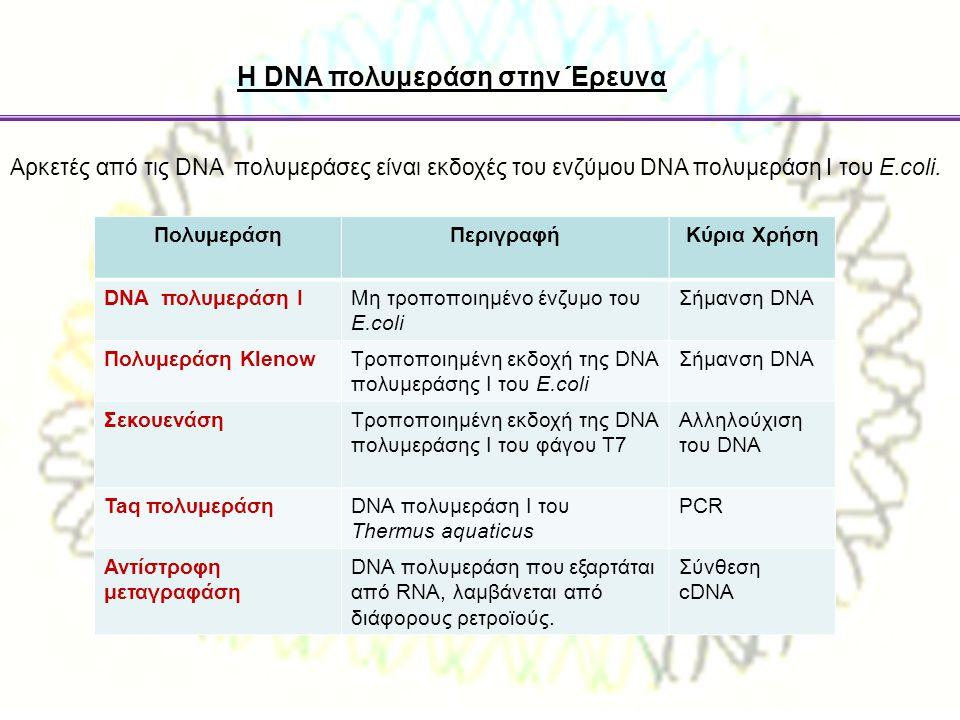 Η DNA πολυμεράση στην Έρευνα Aρκετές από τις DNA πολυμεράσες είναι εκδοχές του ενζύμου DNA πολυμεράση Ι του E.coli. ΠολυμεράσηΠεριγραφήΚύρια Χρήση DNA