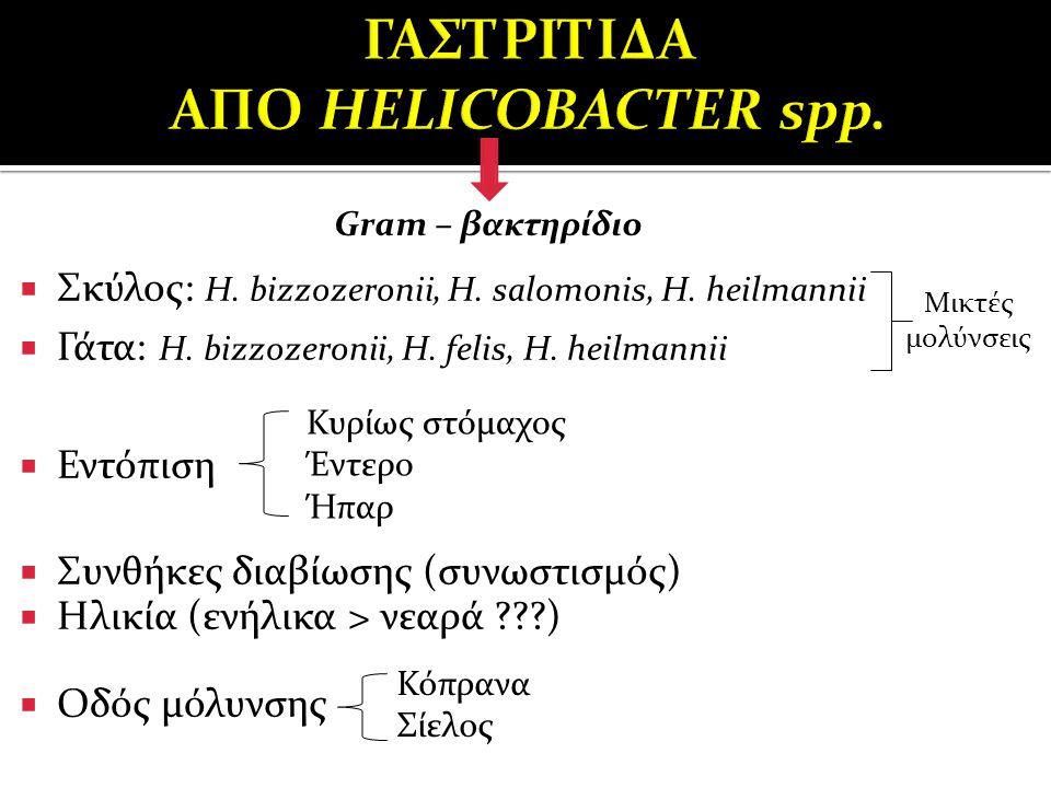  Σκύλος: H. bizzozeronii, H. salomonis, H. heilmannii  Γάτα: H. bizzozeronii, H. felis, H. heilmannii  Εντόπιση  Συνθήκες διαβίωσης (συνωστισμός)