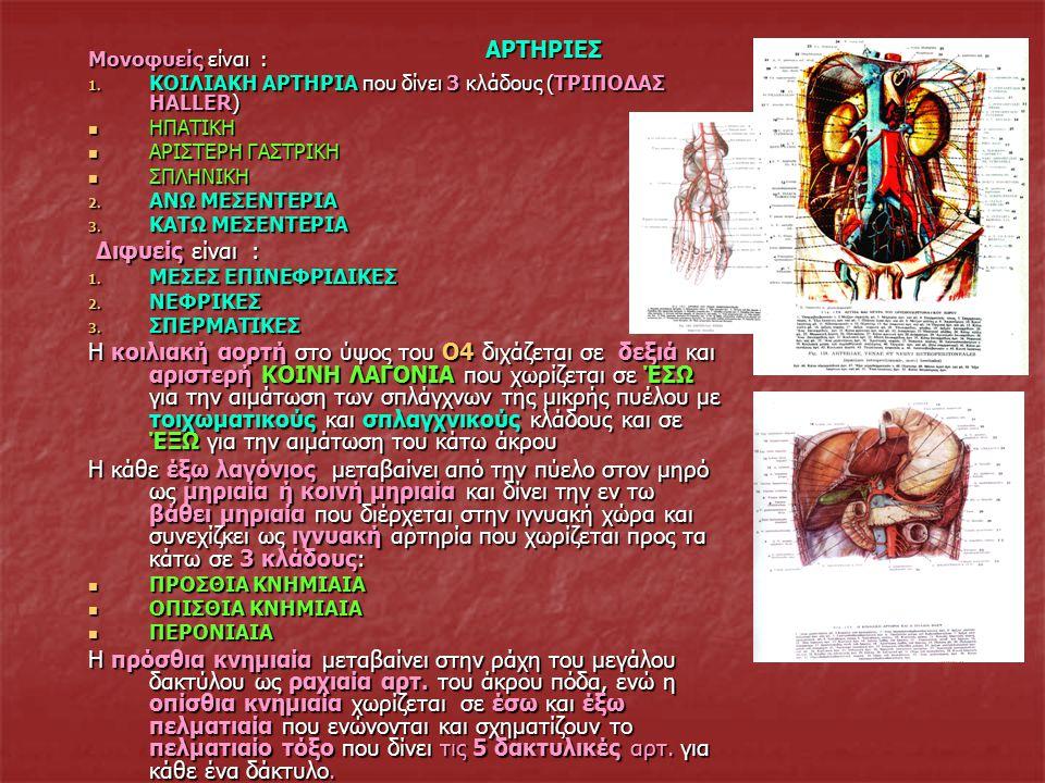 ΦΛΕΒΕΣ Οι φλέβες σε αντίθεση με τιις αρτηρίες (απαγωγά ή φυγόκεντρα αγγεία=αγγεία που φέρουν το αίμα από το κέντρο (καρδιά) προς την περιφέρεια), είναι προσαγωγά ή κεντρομόλα αγγεία με τα οποία το αίμα από τους ιστούς επιστρέφει στην καρδιά.
