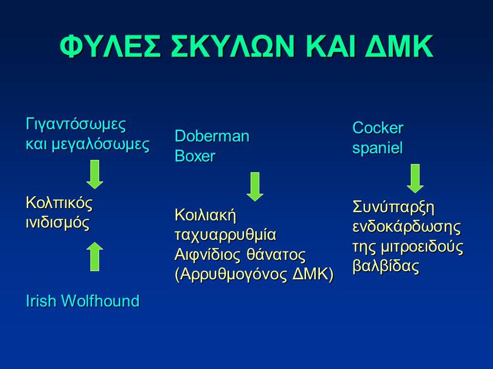 ΦΥΛΕΣ ΣΚΥΛΩΝ ΚΑΙ ΔΜΚ Γιγαντόσωμες και μεγαλόσωμες Κολπικόςινιδισμός Irish Wolfhound DobermanBoxerΚοιλιακήταχυαρρυθμία Αιφνίδιος θάνατος (Αρρυθμογόνος