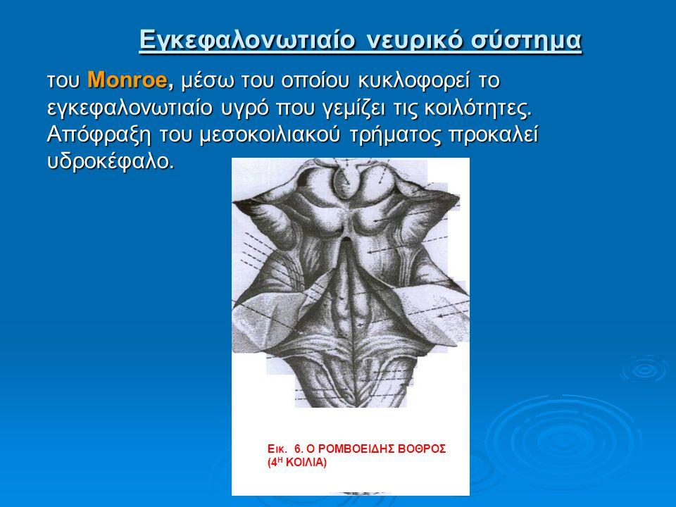Εγκεφαλονωτιαίο νευρικό σύστημα Εγκεφαλονωτιαίο νευρικό σύστημα του Μοnroe, μέσω του οποίου κυκλοφορεί το εγκεφαλονωτιαίο υγρό που γεμίζει τις κοιλότη