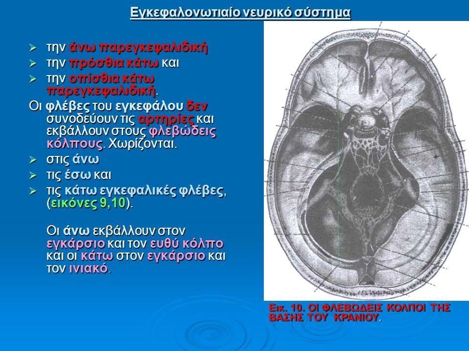 Εγκεφαλονωτιαίο νευρικό σύστημα Εγκεφαλονωτιαίο νευρικό σύστημα  την άνω παρεγκεφαλιδική  την πρόσθια κάτω και  την οπίσθια κάτω παρεγκεφαλιδική. Ο