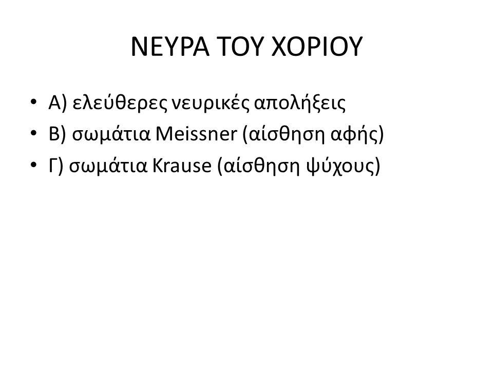 ΝΕΥΡΑ ΤΟΥ ΧΟΡΙΟΥ Α) ελεύθερες νευρικές απολήξεις Β) σωμάτια Meissner (αίσθηση αφής) Γ) σωμάτια Krause (αίσθηση ψύχους)