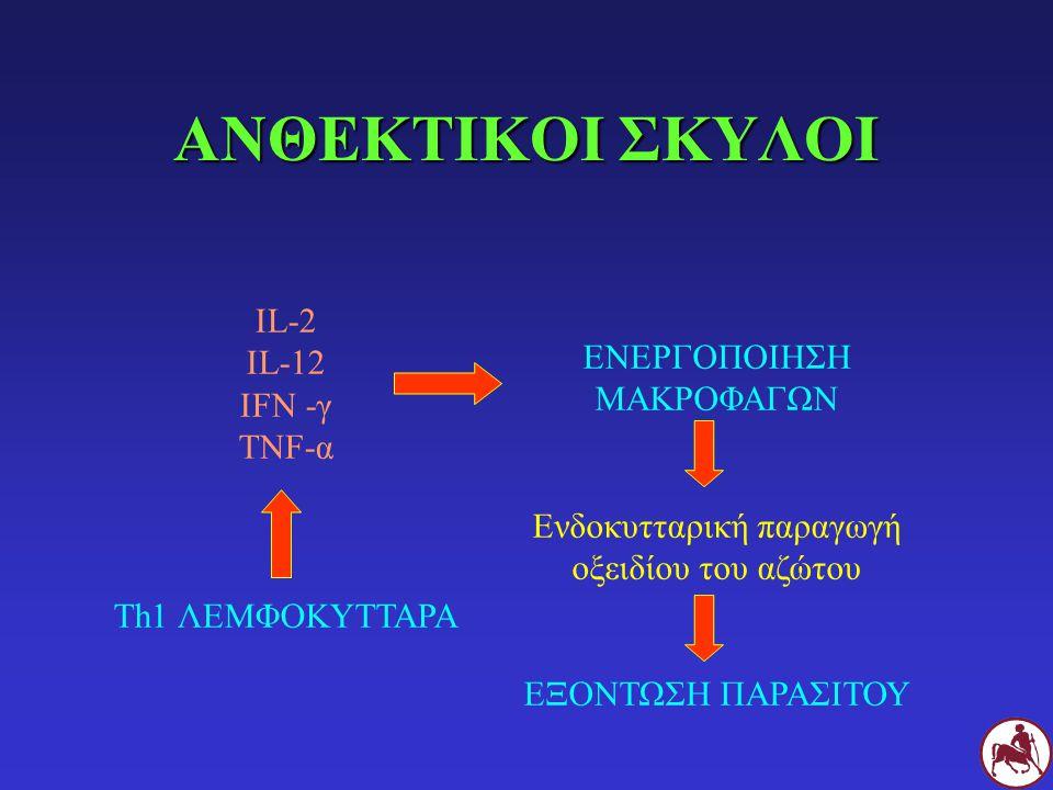 ΑΝΘΕΚΤΙΚΟΙ ΣΚΥΛΟΙ IL-2 IL-12 IFN -γ TNF-α Th1 ΛΕΜΦΟΚΥΤΤΑΡΑ ΕΝΕΡΓΟΠΟΙΗΣΗ ΜΑΚΡΟΦΑΓΩΝ Ενδοκυτταρική παραγωγή οξειδίου του αζώτου ΕΞΟΝΤΩΣΗ ΠΑΡΑΣΙΤΟΥ