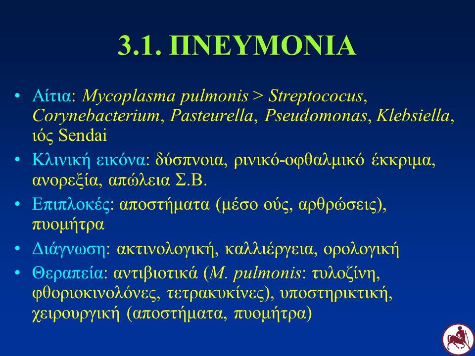 3.1. ΠΝΕΥΜΟΝΙΑ Αίτια: Mycoplasma pulmonis > Streptococus, Corynebacterium, Pasteurella, Pseudomonas, Klebsiella, ιός Sendai Κλινική εικόνα: δύσπνοια,