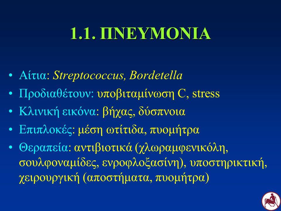 1.1. ΠΝΕΥΜΟΝΙΑ Αίτια: Streptococcus, Bordetella Προδιαθέτουν: υποβιταμίνωση C, stress Κλινική εικόνα: βήχας, δύσπνοια Επιπλοκές: μέση ωτίτιδα, πυομήτρ