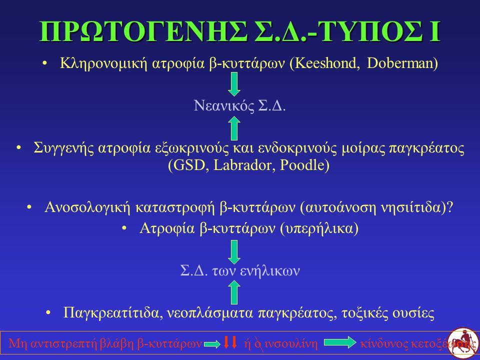 ΠΡΩΤΟΓΕΝΗΣ Σ.Δ.-ΤΥΠΟΣ Ι Κληρονομική ατροφία β-κυττάρων (Keeshond, Doberman) Νεανικός Σ.Δ. Συγγενής ατροφία εξωκρινούς και ενδοκρινούς μοίρας παγκρέατο
