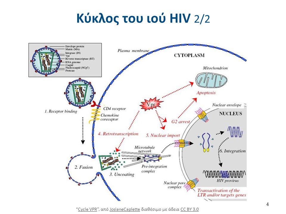 Κύκλος του ιού HIV 2/2 4 Cycle VPR , από JosianeCaplette διαθέσιμο με άδεια CC BY 3.0Cycle VPRJosianeCapletteCC BY 3.0