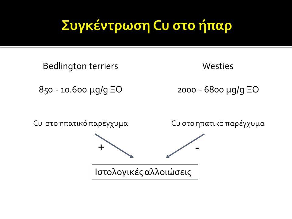Bedlington terriers 850 - 10.600 μg/g ΞΟ Cu στο ηπατικό παρέγχυμα Westies 2000 - 6800 μg/g ΞΟ Cu στο ηπατικό παρέγχυμα Ιστολογικές αλλοιώσεις +-