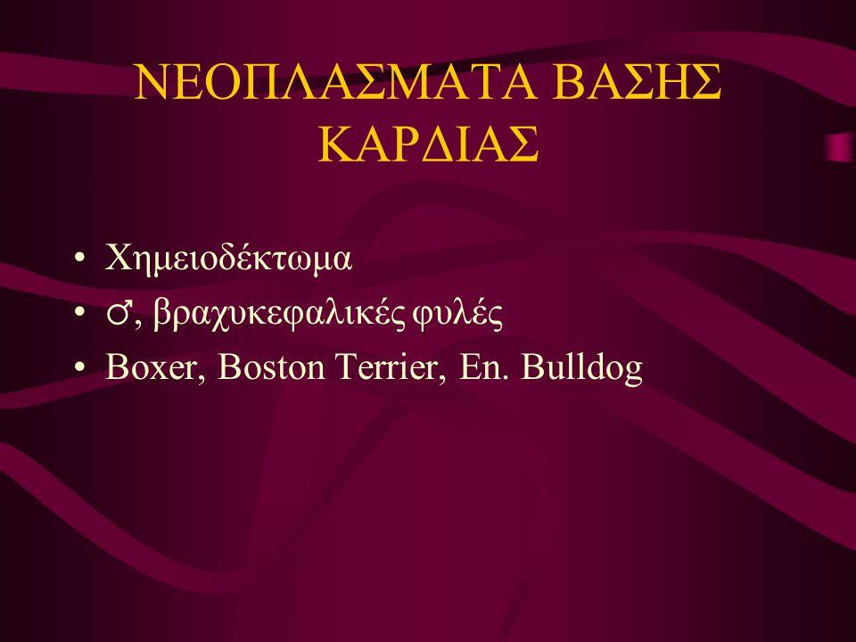 ΝΕΟΠΛΑΣΜΑΤΑ ΒΑΣΗΣ ΚΑΡΔΙΑΣ Χημειοδέκτωμα ♂, βραχυκεφαλικές φυλές Boxer, Boston Terrier, En. Bulldog