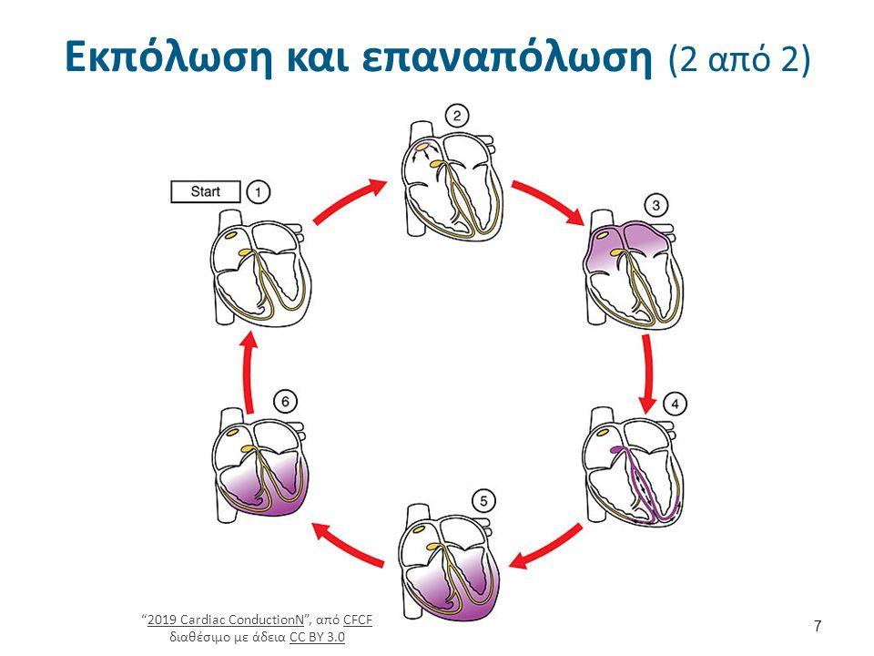 Δυναμικό ηρεμίας (2 από 5) Κατάσταση ηρεμίας = κύτταρο από μέσα αρνητικό & απέξω θετικό = πολωμένο κύτταρο, δηλ.