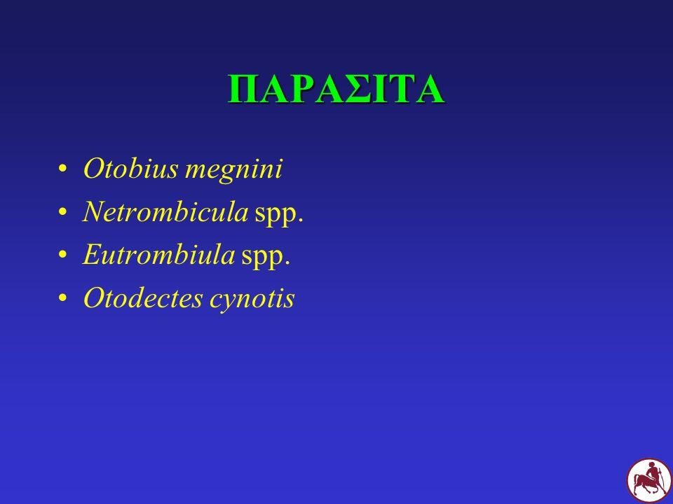 ΠΑΡΑΣΙΤΑ Otobius megnini Netrombicula spp. Eutrombiula spp. Otodectes cynotis