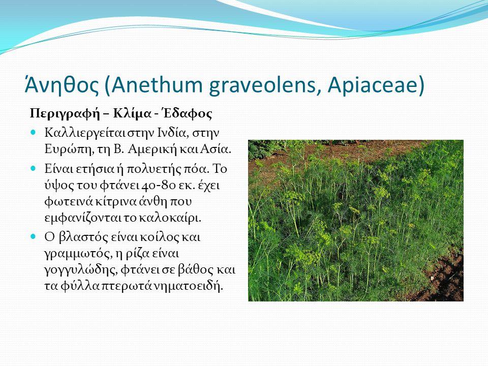 Άνηθος (Αnethum graveolens, Apiaceae) Περιγραφή – Κλίμα - Έδαφος Καλλιεργείται στην Ινδία, στην Ευρώπη, τη Β. Αμερική και Ασία. Είναι ετήσια ή πολυετή