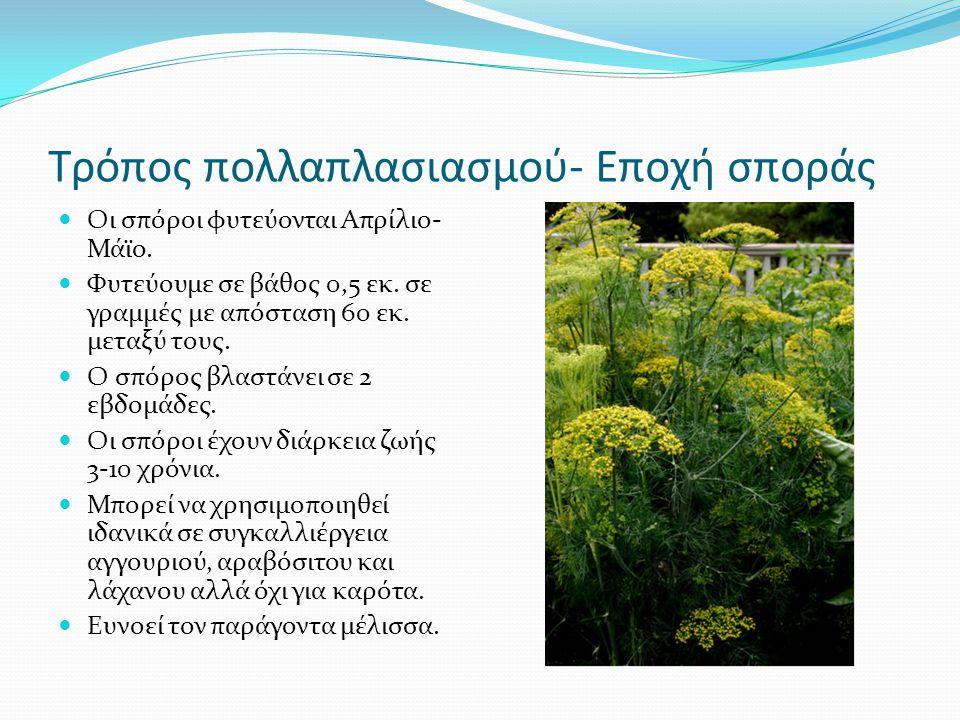 Τρόπος πολλαπλασιασμού- Εποχή σποράς Οι σπόροι φυτεύονται Απρίλιο- Μάϊο. Φυτεύουμε σε βάθος 0,5 εκ. σε γραμμές με απόσταση 60 εκ. μεταξύ τους. Ο σπόρο
