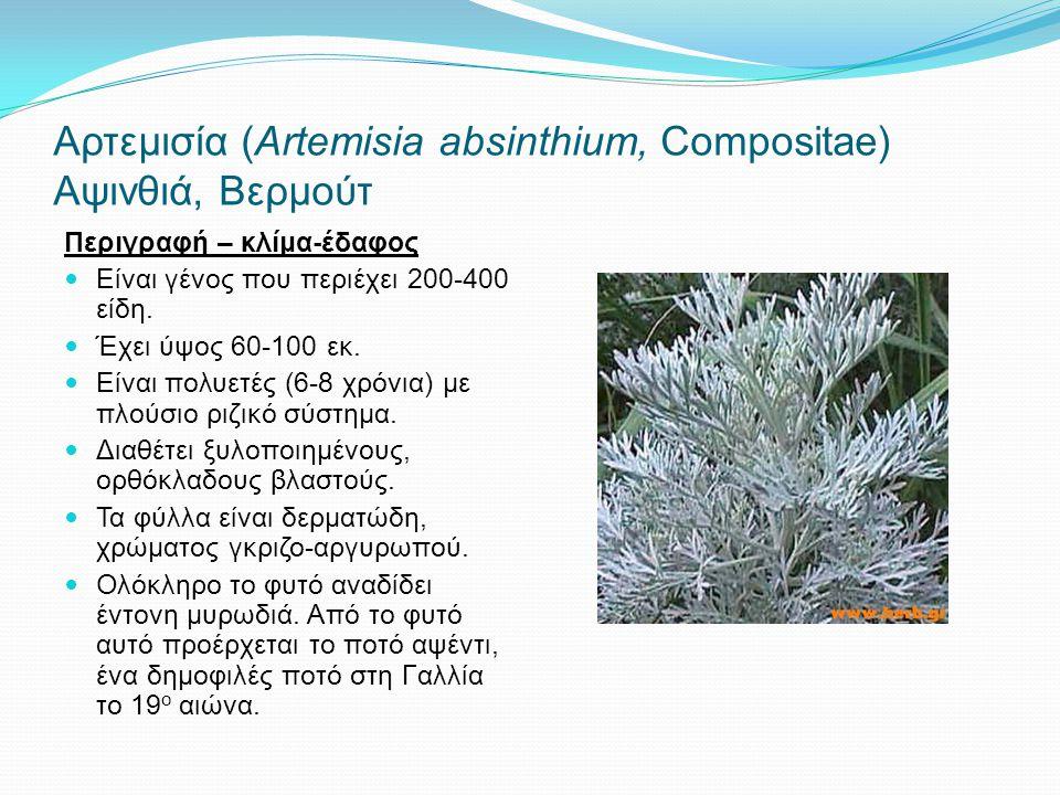 Αρτεμισία (Αrtemisia absinthium, Compositae) Αψινθιά, Βερμούτ Περιγραφή – κλίμα-έδαφος Είναι γένος που περιέχει 200-400 είδη. Έχει ύψος 60-100 εκ. Είν