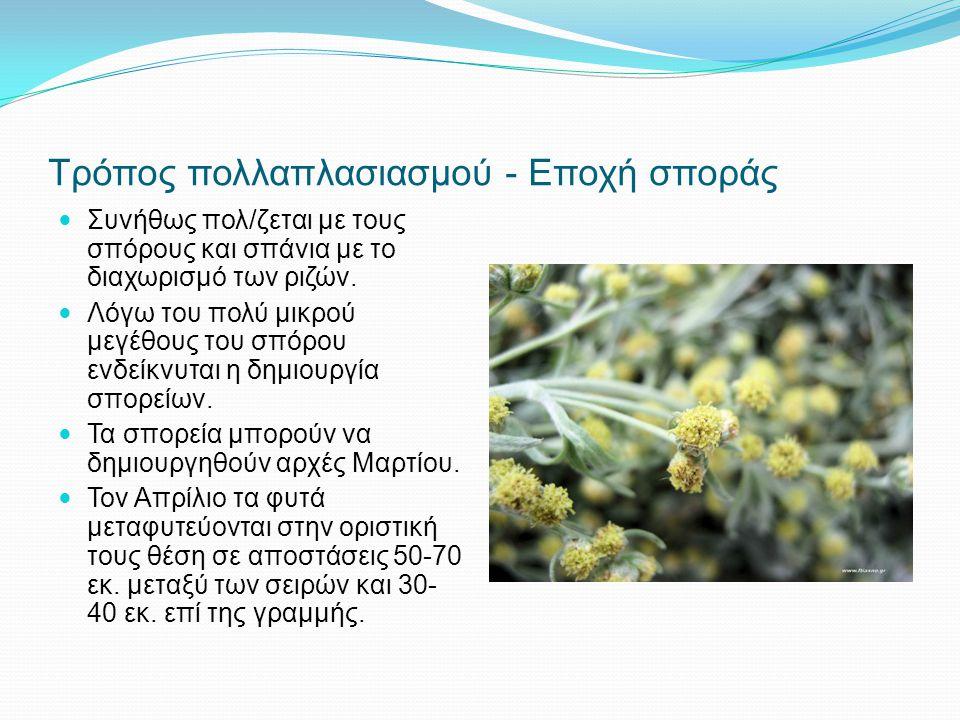 Τρόπος πολλαπλασιασμού - Εποχή σποράς Συνήθως πολ/ζεται με τους σπόρους και σπάνια με το διαχωρισμό των ριζών. Λόγω του πολύ μικρού μεγέθους του σπόρο