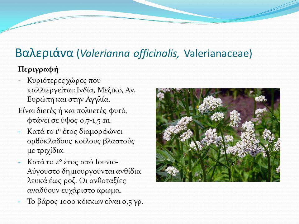 Βαλεριάνα (Valerianna officinalis, Valerianaceae) Περιγραφή -Κυριότερες χώρες που καλλιεργείται: Ινδία, Μεξικό, Αν. Ευρώπη και στην Αγγλία. Είναι διετ