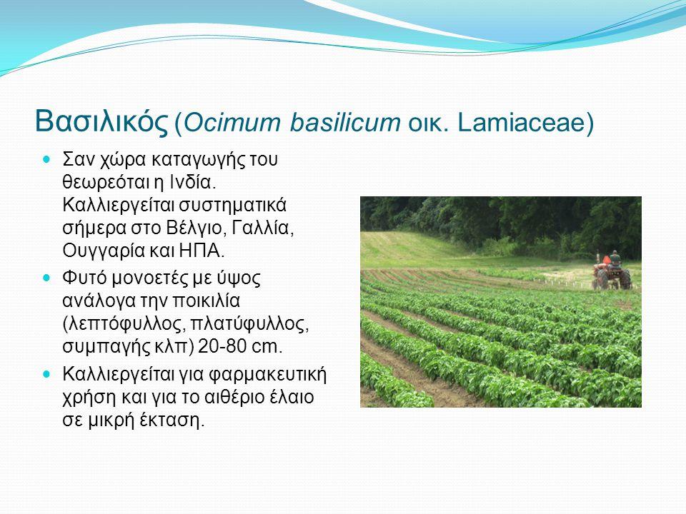 Βασιλικός (Ocimum basilicum οικ. Lamiaceae) Σαν χώρα καταγωγής του θεωρεόται η Ινδία. Καλλιεργείται συστηματικά σήμερα στο Βέλγιο, Γαλλία, Ουγγαρία κα