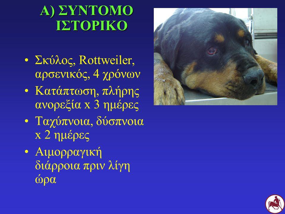 Α) ΣΥΝΤΟΜΟ ΙΣΤΟΡΙΚΟ Σκύλος, Rottweiler, αρσενικός, 4 χρόνων Κατάπτωση, πλήρης ανορεξία x 3 ημέρες Ταχύπνοια, δύσπνοια x 2 ημέρες Αιμορραγική διάρροια