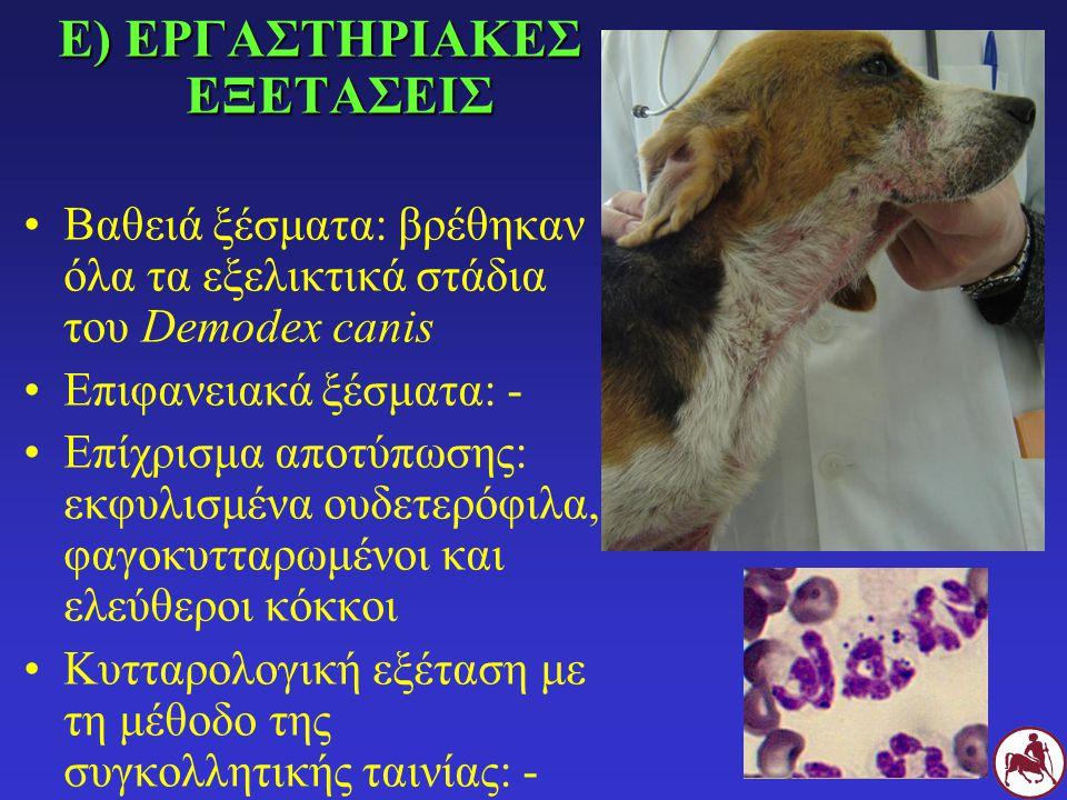 Ε) ΔΙΑΓΝΩΣΗ Γενικευμένη δεμοδήκωση των νεαρών σκύλων με βακτηριδιακή επιπλοκή