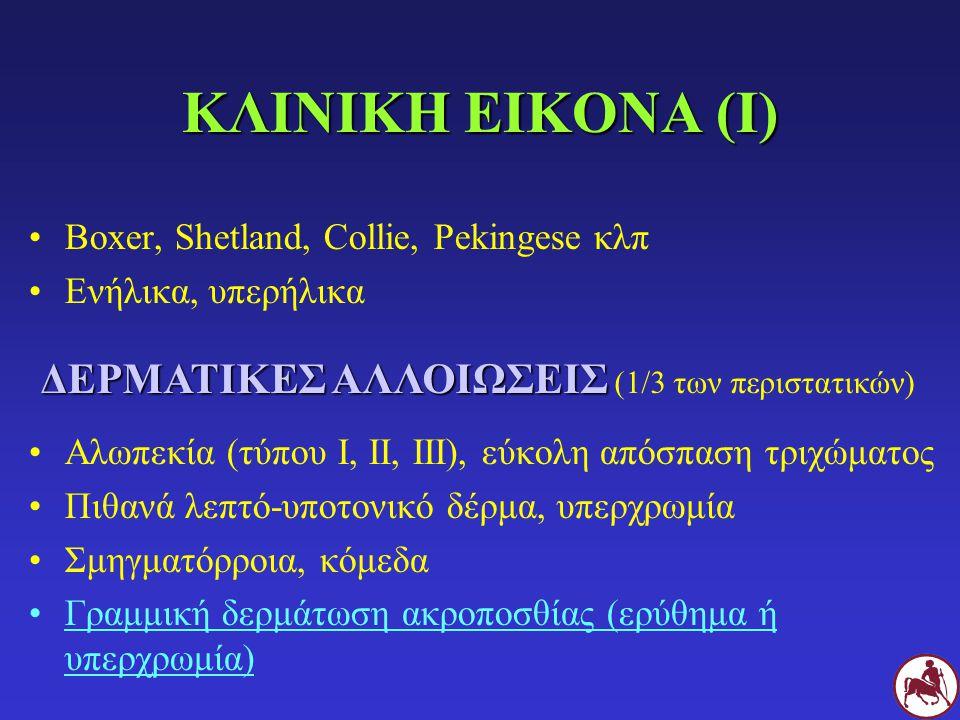 ΚΛΙΝΙΚΗ ΕΙΚΟΝΑ (Ι) Boxer, Shetland, Collie, Pekingese κλπ Ενήλικα, υπερήλικα Αλωπεκία (τύπου Ι, ΙΙ, ΙΙΙ), εύκολη απόσπαση τριχώματος Πιθανά λεπτό-υποτονικό δέρμα, υπερχρωμία Σμηγματόρροια, κόμεδα Γραμμική δερμάτωση ακροποσθίας (ερύθημα ή υπερχρωμία) ΔΕΡΜΑΤΙΚΕΣ ΑΛΛΟΙΩΣΕΙΣ ΔΕΡΜΑΤΙΚΕΣ ΑΛΛΟΙΩΣΕΙΣ (1/3 των περιστατικών)
