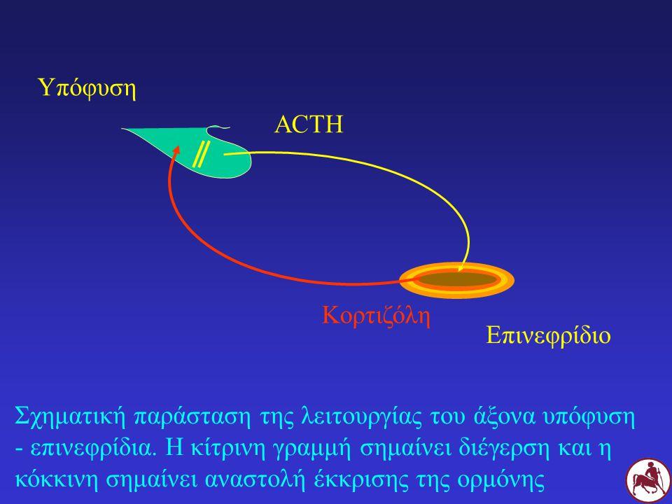 Σχηματική παράσταση της λειτουργίας του άξονα υπόφυση - επινεφρίδια. Η κίτρινη γραμμή σημαίνει διέγερση και η κόκκινη σημαίνει αναστολή έκκρισης της ο