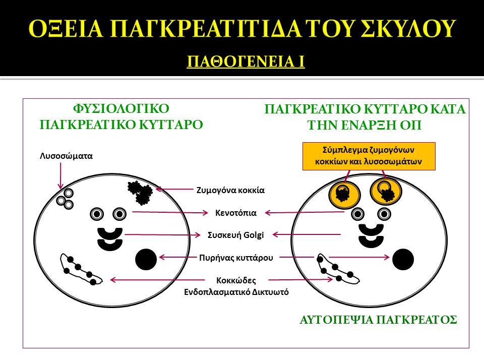 ΠΑΘΟΓΕΝΕΙΑ Ι Κενοτόπια Συσκευή Golgi Κοκκώδες Ενδοπλασματικό Δικτυωτό Πυρήνας κυττάρου Ζυμογόνα κοκκία Λυσοσώματα ΦΥΣΙΟΛΟΓΙΚΟ ΠΑΓΚΡΕΑΤΙΚΟ ΚΥΤΤΑΡΟ ΠΑΓΚ
