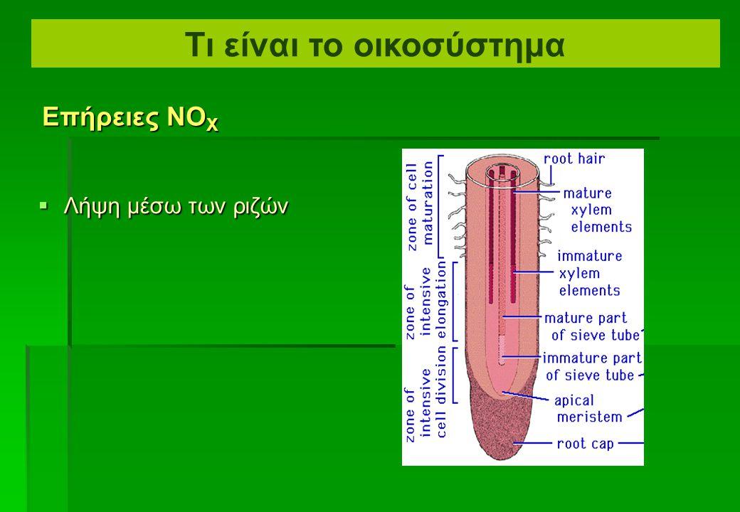  Εισάγεται στο φύλλο μέσω των στομάτων σε υπο– στομάτιες κρύπτες  Διασκορπίζεται μέσω της επιδερμίδας Επήρειες νιτρωδών οξειδίων Τι είναι το οικοσύσ