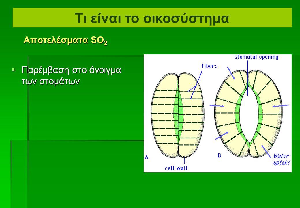 Διάβρωση της επιδερμίδας  Ζημία στα μεσόφυλλα κύτταρα Αποτελέσματα SO 2 Τι είναι το οικοσύστημα