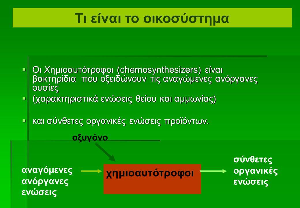  Οι Αυτότροφοι (= μόνο-τρεφόμενοι) καλούνται πρωτογενείς παραγωγοί.  Οι Φωτοαυτότροφοι καθηλώνουν ενέργεια από τον ήλιο και τον αποθηκεύουν στις σύν