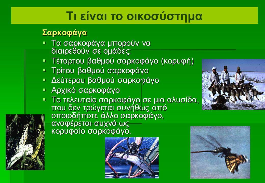  Αυτές οι ομάδες μαζί αποτελούν μια ΤΡΟΦΙΚΗ ΑΛΥΣΙΔΑ  Π.χ., χλόη, κουνέλι, αετός ΣαρκοφάγοΧορτοφάγοΠαραγωγός Τι είναι το οικοσύστημα