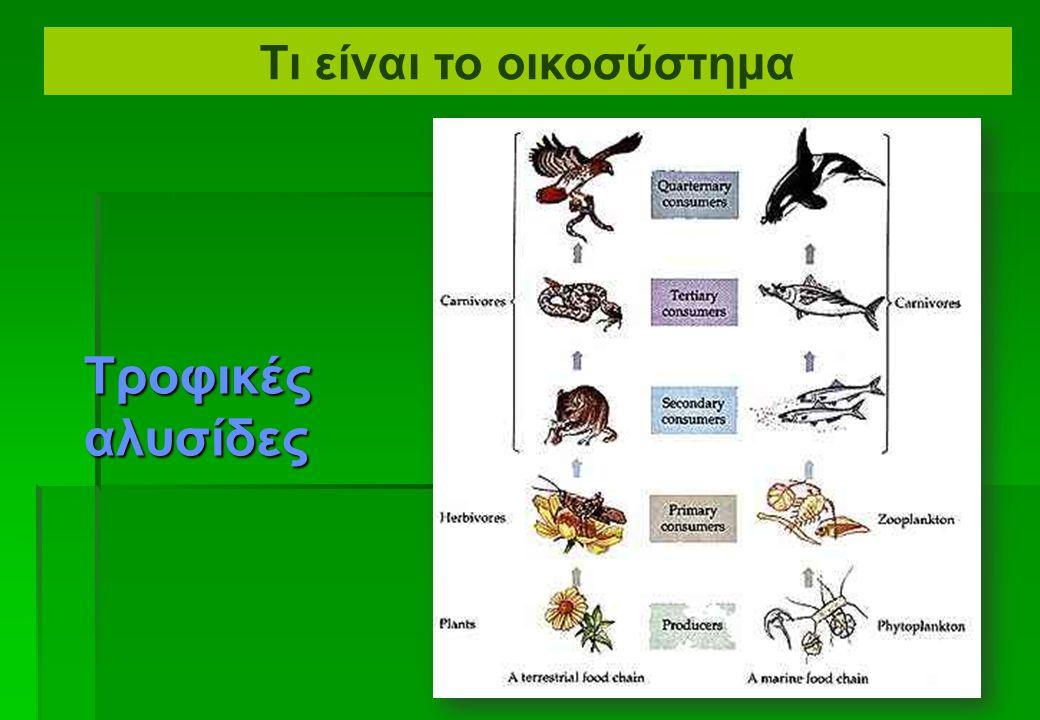  Τα σαρκοφάγα μπορούν να διαιρεθούν σε ομάδες:  Τέταρτου βαθμού σαρκοφάγο (κορυφή)  Τρίτου βαθμού σαρκοφάγο  Δεύτερου βαθμού σαρκοφάγο  Αρχικό σαρκοφάγο  Το τελευταίο σαρκοφάγο σε μια αλυσίδα, που δεν τρώγεται συνήθως από οποιοδήποτε άλλο σαρκοφάγο, αναφέρεται συχνά ως κορυφαίο σαρκοφάγο.