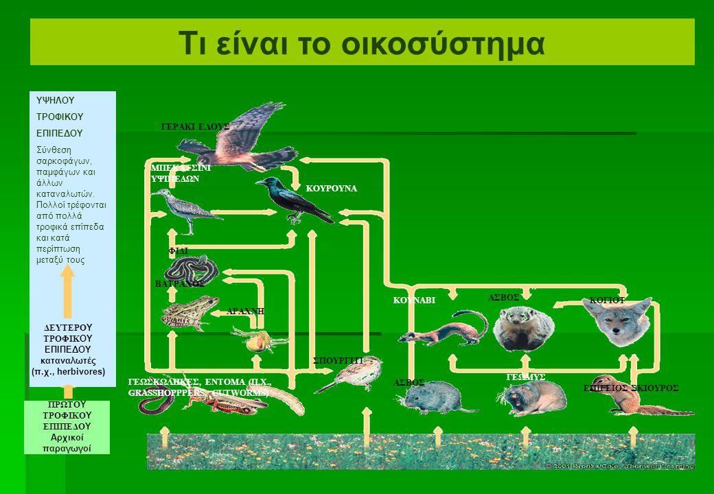  Τροφικό δίκτυο-ιστός Πολλές τροφικές αλυσίδες συνδέονται για να παρουσιαστούν πιο σύνθετες σχέσεις Λιοντάρι βουνών Άλικες Δέντρα Κουνέλι Φίδι Ποντίκι Χλόη Γεράκι Βάτραχος Γρύλος Θάμνοι Τι είναι το οικοσύστημα