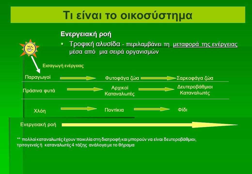  Πόση ενέργεια περνά από ένα τροφικό επίπεδο στο επόμενο;  Πόσο αποδοτικές είναι τέτοιες μεταφορές; Ενεργειακές μεταφορές μεταξύ των τροφικών επιπέδ