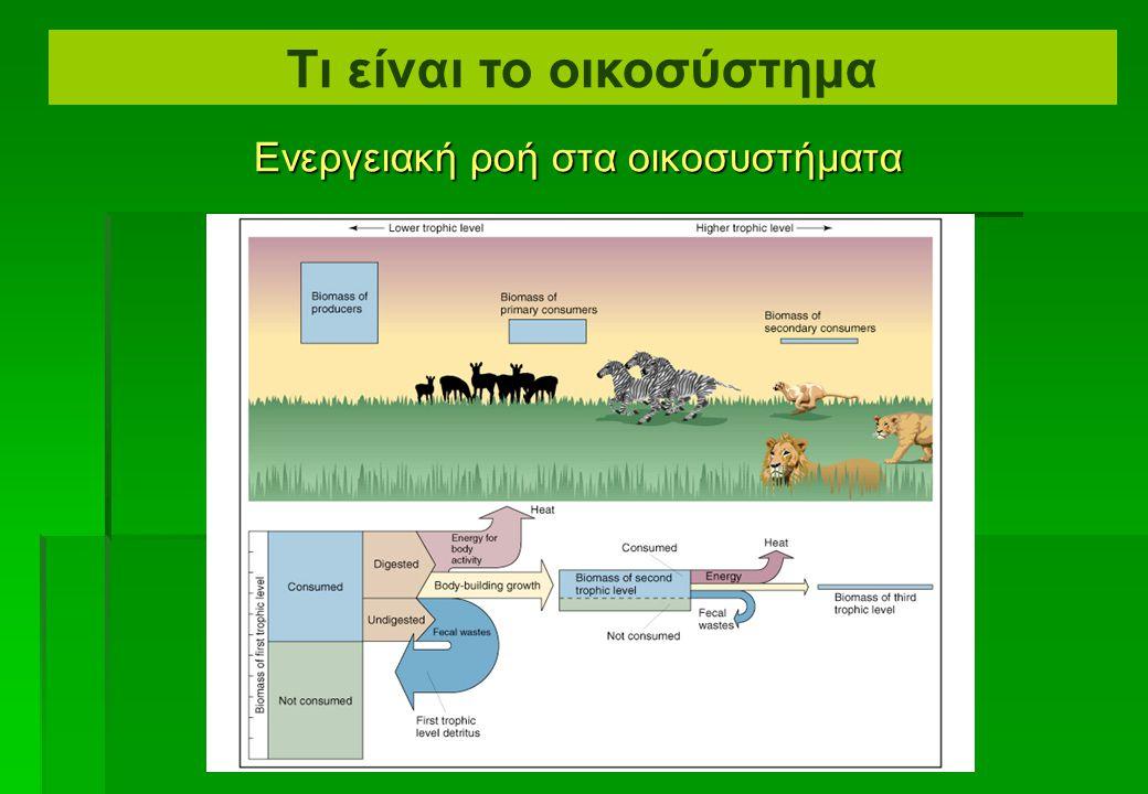 Ενεργειακή ροή στα οικοσυστήματα Τι είναι το οικοσύστημα