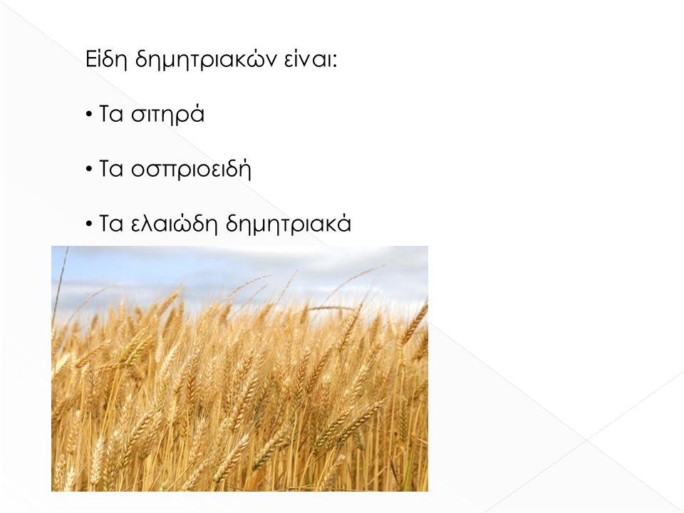 Τα οφέλη του ψωμιού είναι : Η κυτταρίνη, δηλαδή ο υδατάνθρακας Η γλουτένη Η βιταμίνη Ε Οι βιταμίνες Β1 και Β2 Οι φυτικές ίνες Το ψωμί είναι πλούσιο σε
