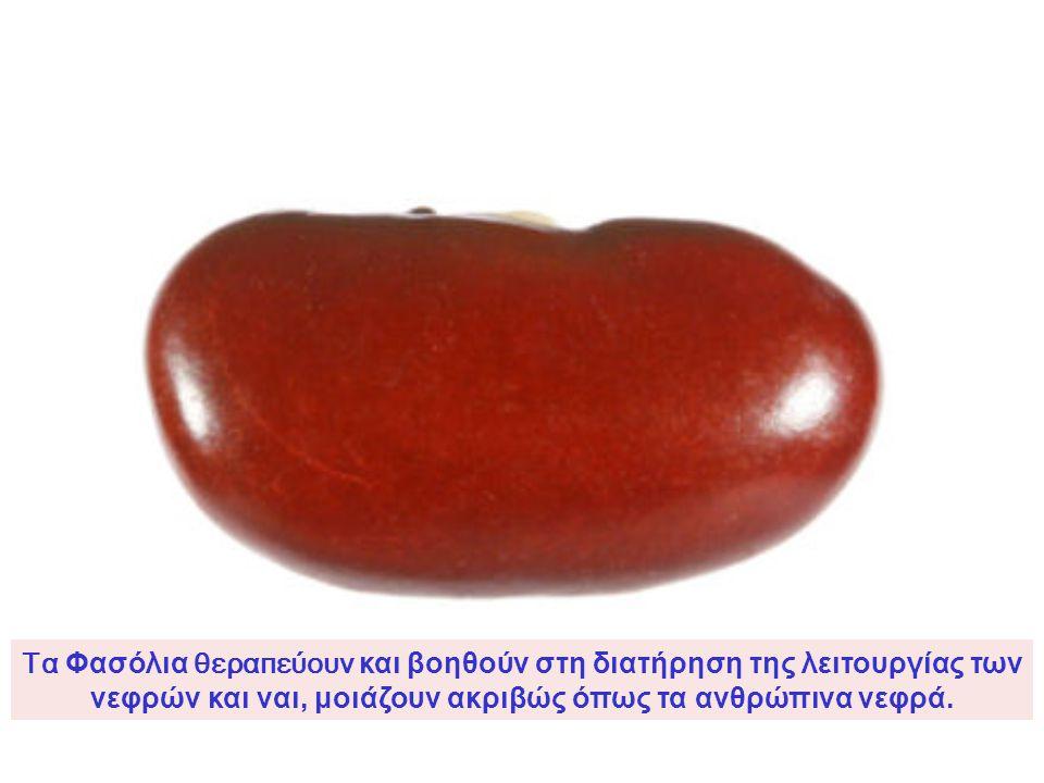 Ένα Καρύδι μοιάζει με μικρό εγκέφαλο, με αριστερό και δεξιό ημισφαίριο, με άνω και κάτω παρεγκεφαλίδα. Ακόμα και οι ρυτίδες ή διπλώσεις του καρυδιού ε