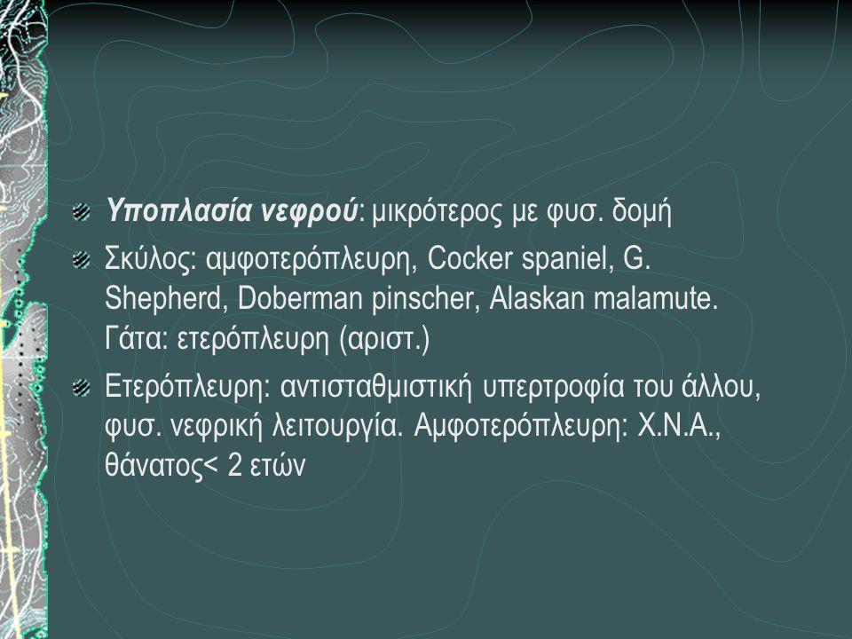 Υποπλασία νεφρού : μικρότερος με φυσ. δομή Σκύλος: αμφοτερόπλευρη, Cocker spaniel, G. Shepherd, Doberman pinscher, Alaskan malamute. Γάτα: ετερόπλευρη