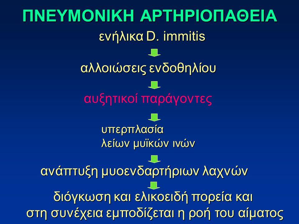 ΠΝΕΥΜΟΝΙΚΗ ΑΡΤΗΡΙΟΠΑΘΕΙΑ ενήλικα D. immitis αλλοιώσεις ενδοθηλίου υπερπλασία λείων μυϊκών ινών ανάπτυξη μυοενδαρτήριων λαχνών αυξητικοί παράγοντες διό
