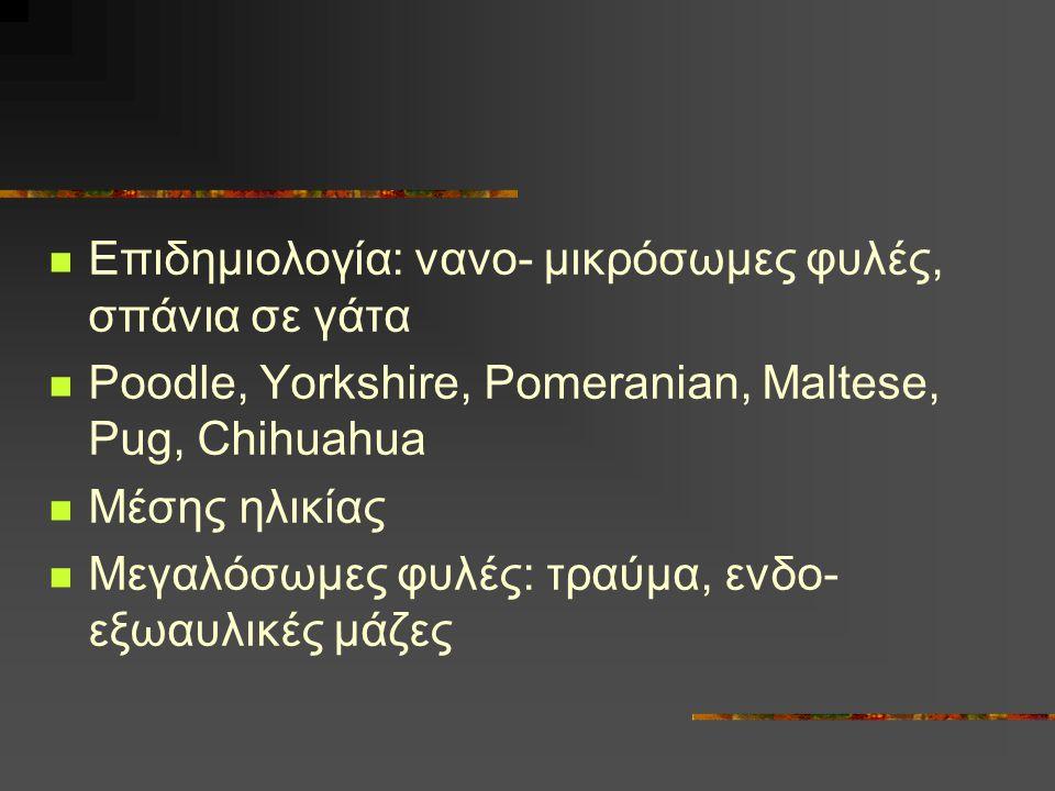 Επιδημιολογία: νανο- μικρόσωμες φυλές, σπάνια σε γάτα Poodle, Yorkshire, Pomeranian, Maltese, Pug, Chihuahua Μέσης ηλικίας Μεγαλόσωμες φυλές: τραύμα,
