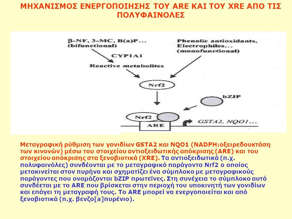 ΜΗΧΑΝΙΣΜΟΣ ΕΝΕΡΓΟΠΟΙΗΣΗΣ ΤΟΥ ΑRE ΚΑΙ ΤΟΥ XRE ΑΠΟ ΤΙΣ ΠΟΛΥΦΑΙΝΟΛΕΣ Μεταγραφική ρύθμιση των γονιδίων GSTA2 και NQO1 (ΝΑDPH:οξειρεδουκτάση των κινονών) μ