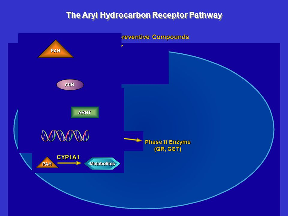 The Aryl Hydrocarbon Receptor Pathway Chemopreventive Compounds Phase II Enzyme (QR, GST)