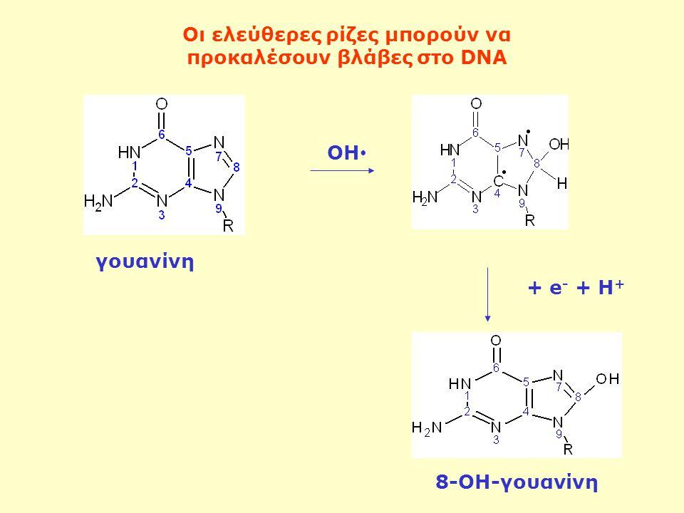 ΟΗ + e - + H + γουανίνη 8-ΟΗ-γουανίνη Οι ελεύθερες ρίζες μπορούν να προκαλέσουν βλάβες στο DNA