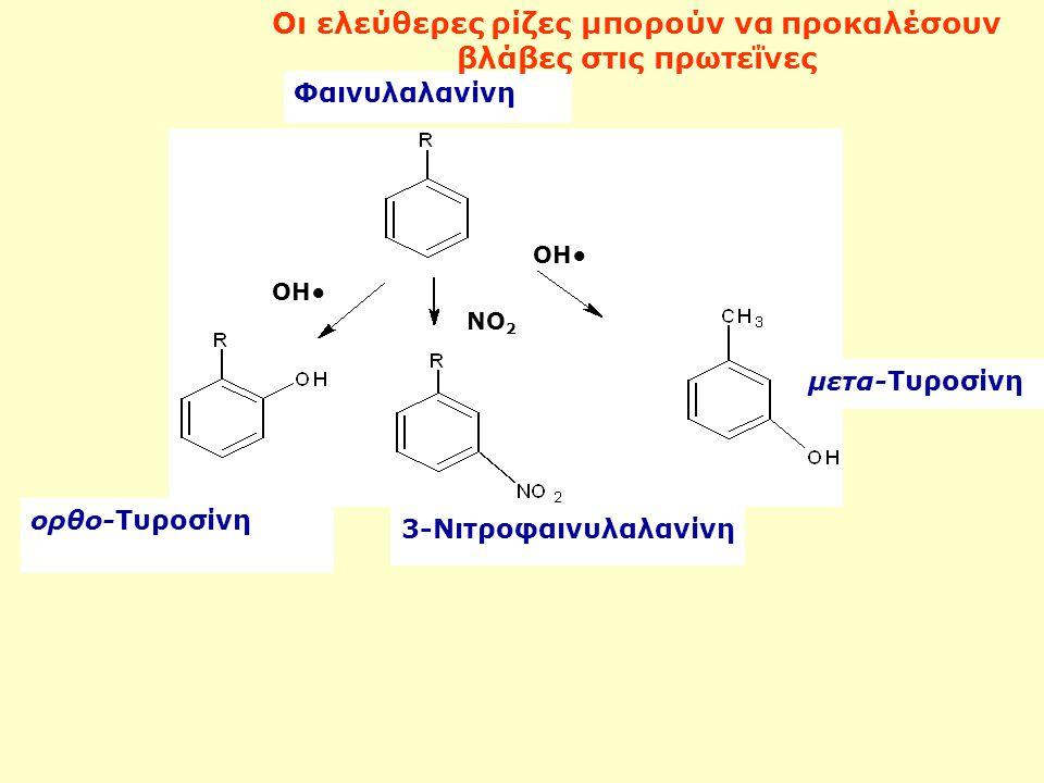 ΟΗ ΝΟ 2 ΟΗ ορθο-Τυροσίνη μετα-Τυροσίνη 3-Νιτροφαινυλαλανίνη Φαινυλαλανίνη Οι ελεύθερες ρίζες μπορούν να προκαλέσουν βλάβες στις πρωτεΐνες