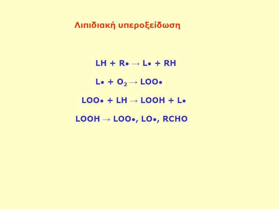 LH + R → L + RH L + O 2 → LOO LOO + LH → LOOH + L LOOH → LOO, LO, RCHO Λιπιδιακή υπεροξείδωση