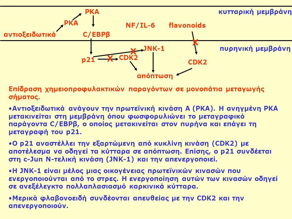 PKA C/EBPβ NF/IL-6flavonoids αντιοξειδωτικά p21 JNK-1 CDK2 Επίδραση χημειοπροφυλακτικών παραγόντων σε μονοπάτια μεταγωγής σήματος. Αντιοξειδωτικά ανάγ